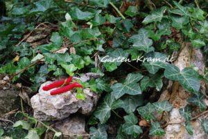 Felco Gartenschere mit roten Griffen in Grünzeug