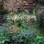 Ringelblumen und Borretsch