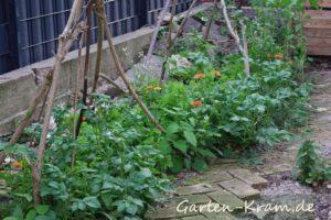 kartoffeln-bohnen-salat-ringelblumen