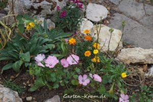 Blumen zwischen Kalksteinen
